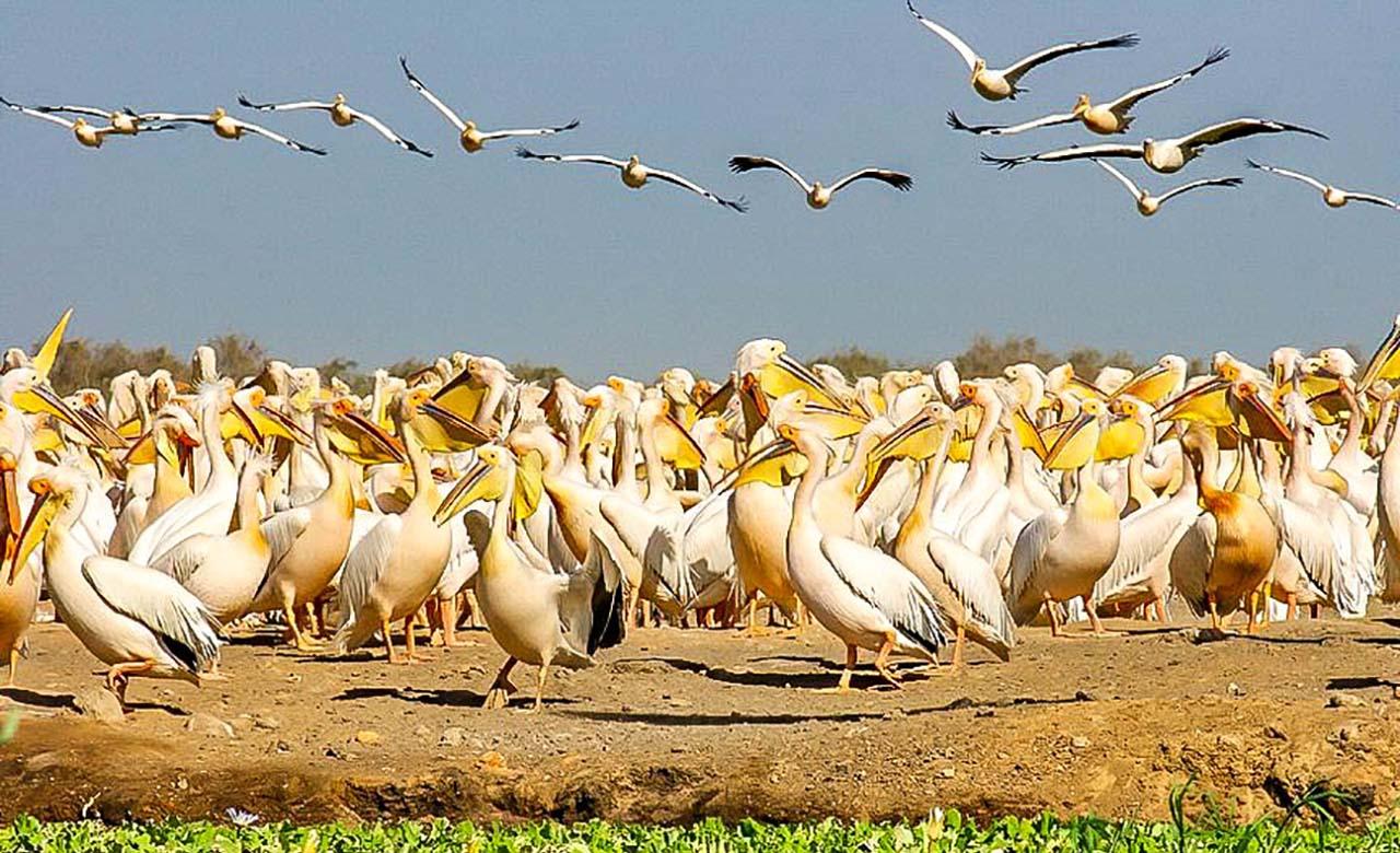Ecotourisme dans le Senegal Oriental