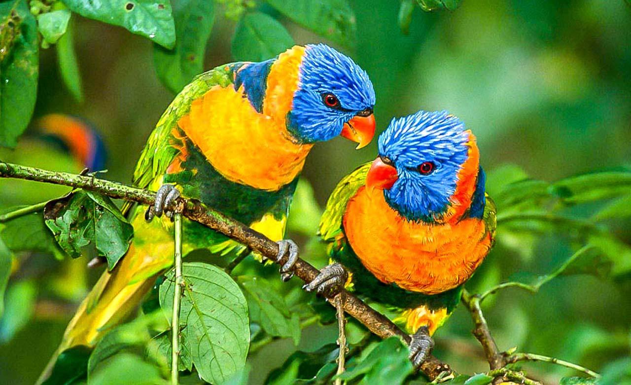 oiseaux exotiques de Nguerigne