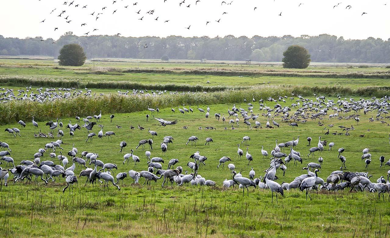 Paradis des oiseaux migrateurs